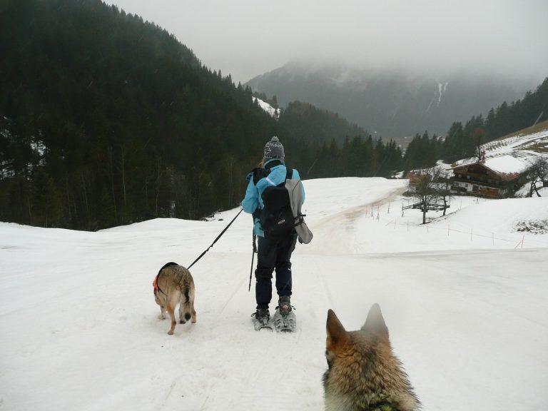 Bezpieczne podróżowanie z psem